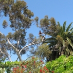 tree-climbing-adelaide