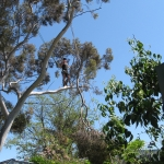tree-pruning-adelaide