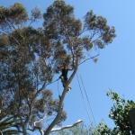 tree-removal-mitcham